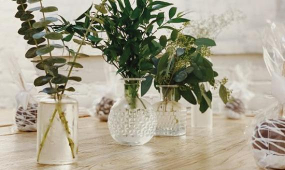 How to Grow Indoor Plants using only Water