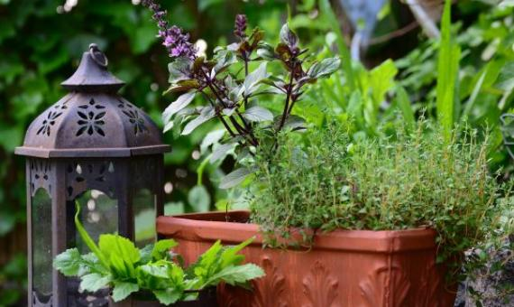 Create a Green Oasis at Home