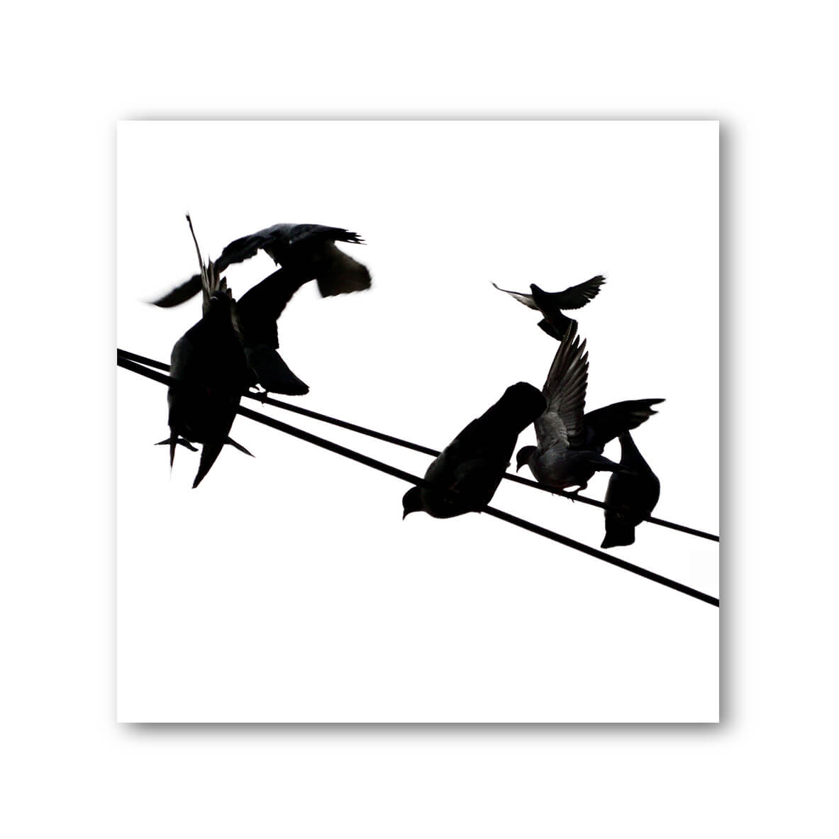 Birds On A Wire Black White 5 Photo Framed Art Print With Mount Harness Prints Previous Next