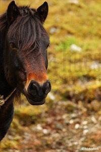 Black beauty horse - Nature Color Photography | World Art